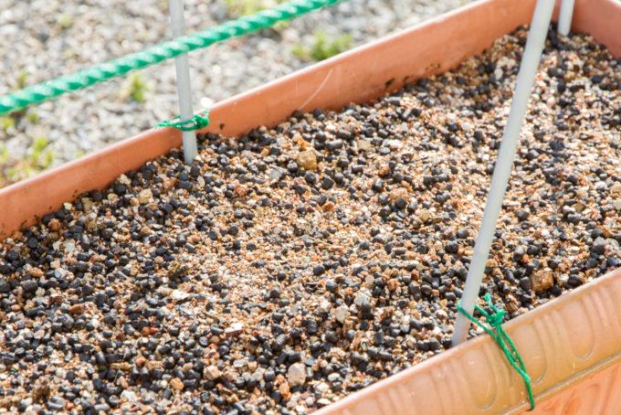 アスパラガスの培養土をリフレッシュ