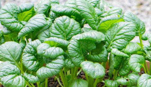 ちぢみ菜の育て方