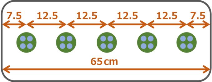 枝豆の播種方法