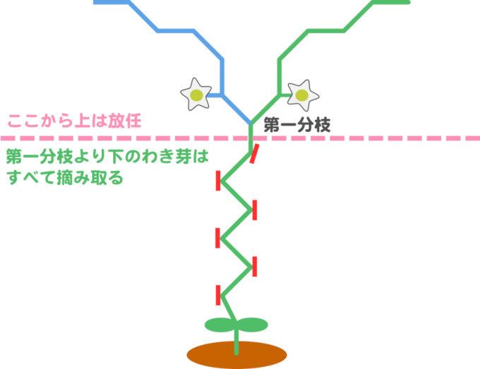 ピーマンの整枝方法