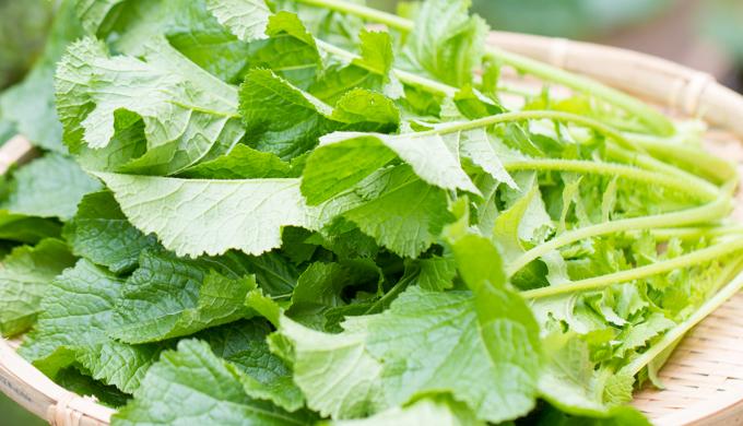 からし菜の育て方・栽培方法