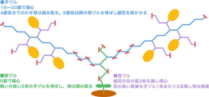 マクワウリの整枝方法