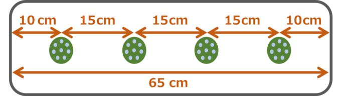 サンチュの種のまき方