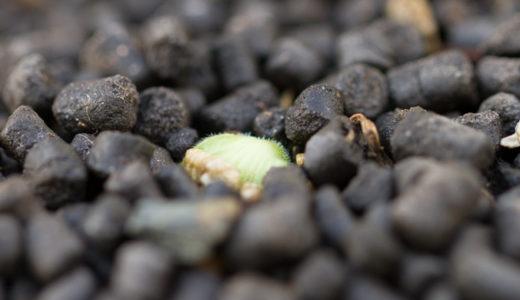 野菜が発芽しない6つの原因とその対策:発芽の三条件とは?